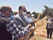 محافظ أسيوط يتفقد بدء حصاد محصول القمح بأبنوب ويعلن زراعة 240 ألف فدان