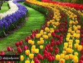 فى عيد الربيع.. تعرف على أبرز أنواع الزهور وكيفية الاعتناء بها فى البيت