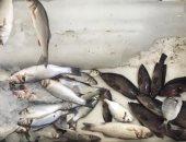 غرفة عمليات ببيطري كفر الشيخ وضبط 18 طن أسماك مملحة غير صالحة