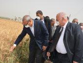 """""""زراعة القليوبية"""": الانتهاء من حصاد مساحات القمح وتوريد 163 ألف طن للصوامع"""
