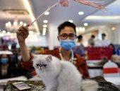 لأول مرة فى روسيا...إصابة قطة بفيروس كورونا
