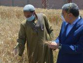 محافظ المنيا: توريد 7313 طن من القمح للصوامع والشون من المزارعين