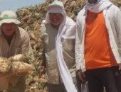 الزراعة: حصاد 2400 فدان بنجر سكر بمشروع المنيا وتوريد 45 ألف طن لـ3 شركات