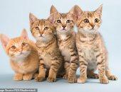 مدير مختبر أبحاث بالإمارات: كورونا يصيب القطط والكلاب آمنة