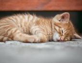 عيد ميلاد قطة يتسبب فى انتشار فيروس كورونا بمدينة ساحلية بتشيلى.. اعرف التفاصيل
