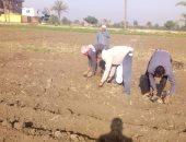 زراعة الشرقية: لجان لمتابعة زراعة المحاصيل الزيتية والأرز