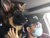 """رامى جمال مع كلبه المريض: """"معاك لحد ما تخف"""""""