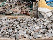 أسعار الأسماك بسوق العبور اليوم.. البلطي الأسواني 17-37  جنيها
