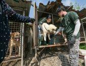 مكتوب لهم عمر جديد..جمعية تنقذ كلاب قبل تناولها كطعام فى كوريا الجنوبية