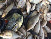 """صور.. موسم الصيد الأهم.. فترة عيد لصيادي البحر الأحمر.. تبدأ منتصف مايو وتستمر 3 شهور.. ويطلقون عليها """"فرشة الشعور"""" لوصول الأسماك في أسراب لمناطق وضع البيض.. صياد: نفضل الصيد خلالها بعد الغروب"""