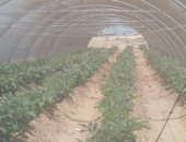 تقرير لايفوتك.. منتجات مصر الزراعية تغزو العالم (فيديو)