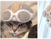 يابانيان يدللان القطط بقبعات من فرائها المتساقط