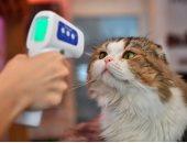 """علماء يزعمون وجود """"دواء للقطط"""" قد يساعد فى علاج فيروس كورونا"""