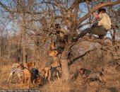 """مش صديق الإنسان بس.. كلاب تنقذ 45 """"وحيد القرن"""" من الصيادين بجنوب إفريقيا.. صور"""
