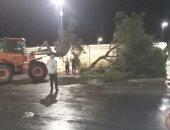 صور.. رفع 10 أشجار ولافتات إعلانات سقطت بسبب الطقس السئ بمدينة الأقصر