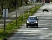مكتوب عليهم العزل.. دببة تجبر سكان إستونيا على البقاء فى المنازل.. صور