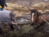 نموذج إنسانى.. فيديو إنقاذ حصان من مستنقع بكندا