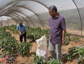 """""""الصوب الزراعية"""" مشروع قومى لإنشاء مجتمعات زراعية تنموية متكاملة.. فيديو"""