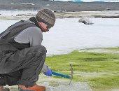 أنتاركتيكا تتحول من الجليد إلى الخضرة بسبب تغير المناخ.. اعرف التفاصيل
