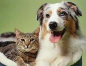 القانون يفرض رسم تنمية موارد على أغذية الكلاب والقطط والطيور بنسبة 25%