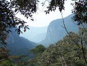 الحفاظ على حرارة أقل من 90 فهرنهايت شرط امتصاص الغابات الاستوائية للكربون