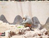 صور.. شاهد كيف تأثرت حيوانات حديقة الجيزة بغياب الجمهور