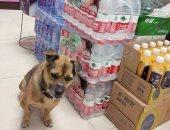 رفض الرجوع بدونه.. حكايه كلب انتظر صديقه بالمستشفى 3 شهور بعد وفاته بكورونا