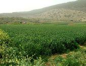 كيف تدعم الدولة القطاع الزراعى وجهود التحول نحو تحقيق الأمن الغذائى؟