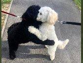 الدم بيحن.. كلب ببريطانيا يتعرف على أخته ويعانقها رغم فصلهما منذ 10 أشهر.. صور