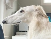 طولها 31 سم.. قصة الكلبة إيريس صاحبة أطول أنف فى العالم .. صور