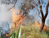صور.. السيطرة على حريق بأشجار النخيل بقرية العضايمة جنوب الأقصر