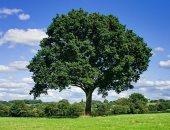 كيف أثر تغير المناخ على حجم الأشجار؟ دراسة جديدة تكشف