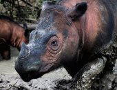دراسة: الحيوانات والنباتات تموت بأسرع معدل منذ انقراض الديناصورات
