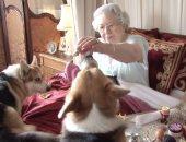 آخر دلع.. كلاب الملكة إليزابيث لهم قائمة طعام ومقبرة خاصة بالأراضى الملكية