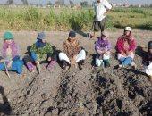 صور.. زراعة الشرقية : زراعة حقل إرشادى للذرة الشامية بالهجين الأصفر 168
