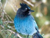 تقرير يحذر: 308 من أنواع النباتات والحيوانات فى كندا معرضه للخطر