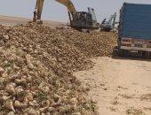 الزراعة: حصاد 1500 فدان بنجر سكر بمشروع المنيا وتوريد 30 ألف طن لـ3 شركات