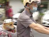 بعد غلاء سعر الخوذ وإلزام السائقين.. كلب يرتدى وعاء معدنيا فى الصين.. فيديو