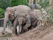 التبرعات تنقذ أكبر حديقة حيوان بريطانية بعد إغلاقها بسبب كورونا