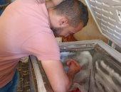 تحرير 21 محضر لمحلات ومخابز خالفوا الاشتراطات الصحية ببنى سويف