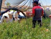 الزراعة: توزيع 6000 شتلة لوز بالمجان بالمنطقة الساحلية لمطروح