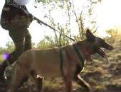 النيابة تأمر بالتحفظ على كلب هاجم طفلا بالتجمع الأول