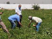 وزير الزراعة يتلقى تقريرا حول تقييم أصناف البطيخ والكنتالوب المستنبطة