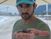 ولى عهد دبي في مغامرة جديدة وسط السلاحف على شواطئ جميرا.. صور