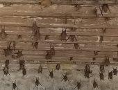 """رئيس مدينة الخانكة: عثرنا على 1000 خفاش بمنزل """"الأسمية"""" المهجور بالخانكة"""