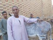 """فيديو وصور.. """"حنتوكة"""" أشهر تمرجى لعلاج الحمير والخيول فى محافظة قنا"""