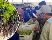 البحوث الزراعية تستهدف زيادة الصادرات الزراعية  لـ5.5 مليون طن
