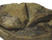 """علماء يكشفون حقيقة """"أحفورة غريبة"""" بعد مرور 10 سنوات على اكتشافها"""