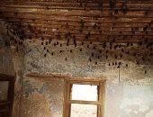 فيديو.. العثور على 1000 خفاش فى منزل مهجور بالخانكة