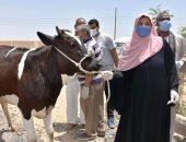الزراعة: 112 مشروعا صغيرا لتمكين المرأة المعيلة اقتصاديا بكفر الشيخ وبنى سويف